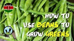 How to use beans to grow your…