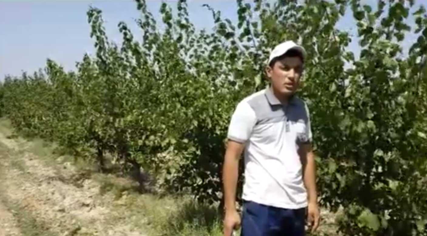 Sarob cooperative, green pruning