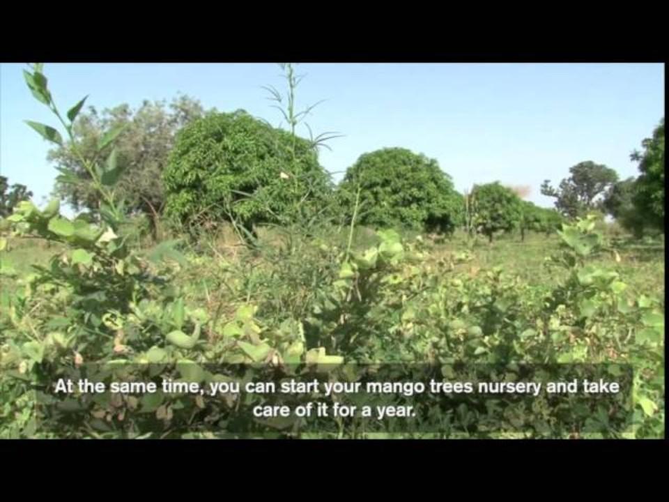 Farmer Innovation in Senegal: the…