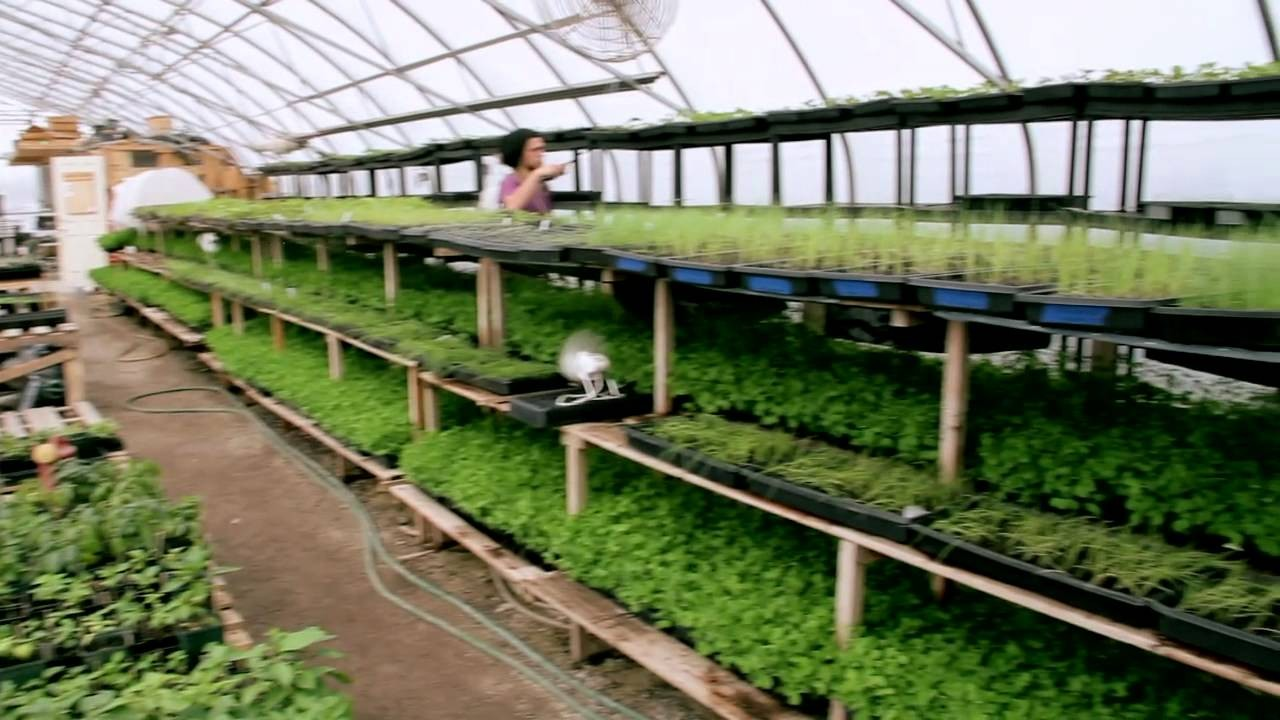 Organic Agriculture in the City of…