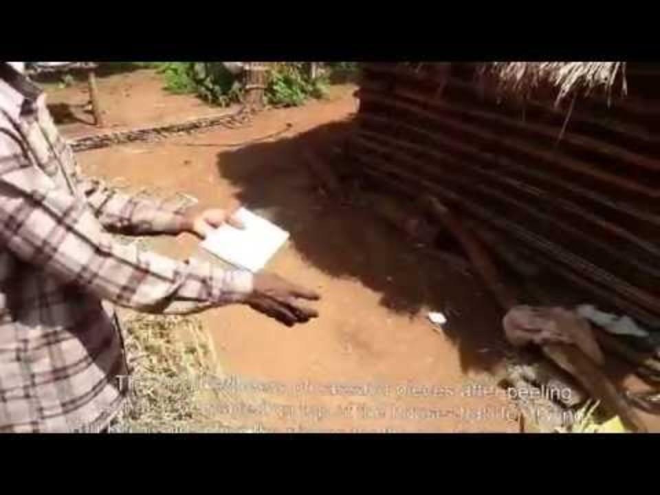 Preservation of cassava