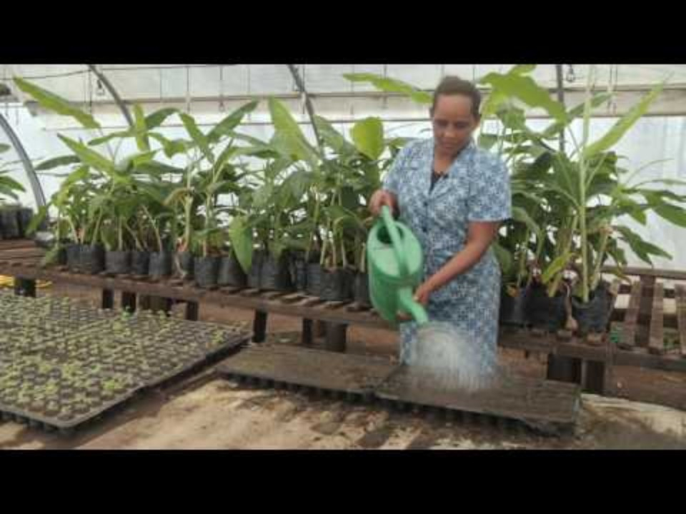 PRODUCING QUALITY SEEDLINGS -…