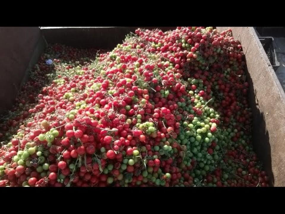 Tomates ISRAEL - super tomato…