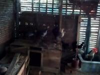 পোলডার-২৫ হাঁস-মুরগী পালন করে ধোপাখালী…