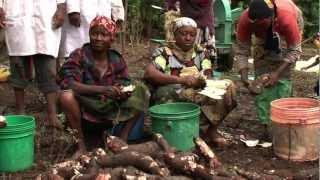 Advantages of growing Cassava