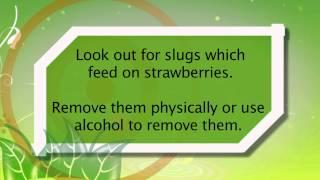 Strawberry & Banana Value…