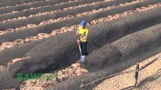 Sawbo: Survival Gardening: Raised…