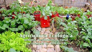Agricultura ecológica urbana,…