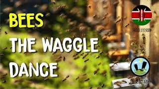 Bees- the waggle dance