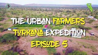 The urban farmers turkana…