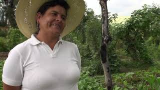 Mujeres semilla: testimonios de…