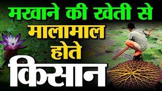 Fox nut (makhana) farming : a to z…
