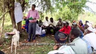 School without walls (Agropastoral…