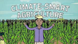 Climate-smart agriculture in…