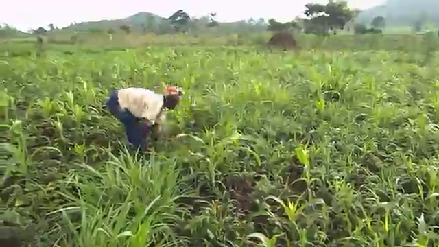 Agricultural video