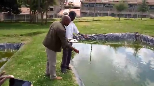 Fish farming-feeding