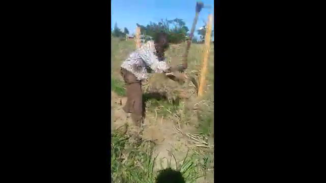 Agricultural video -…