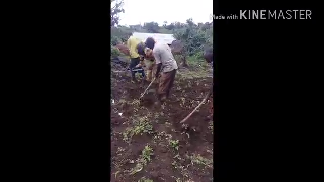 People working in the farm