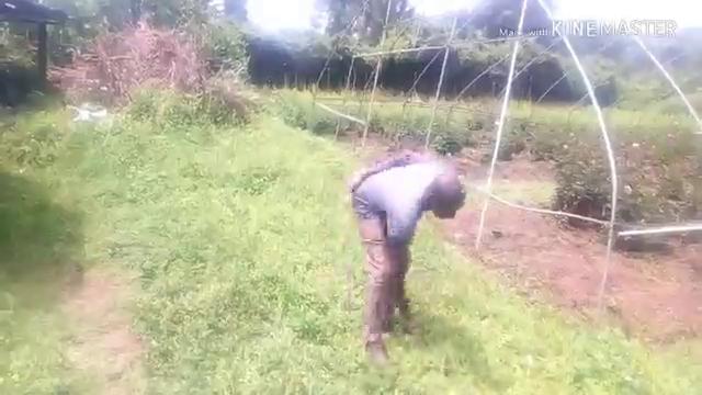 Planting tree seedling