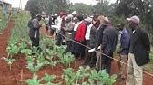 Organic Farming in Kenya -…