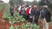 Organic Farming in Kenya -…