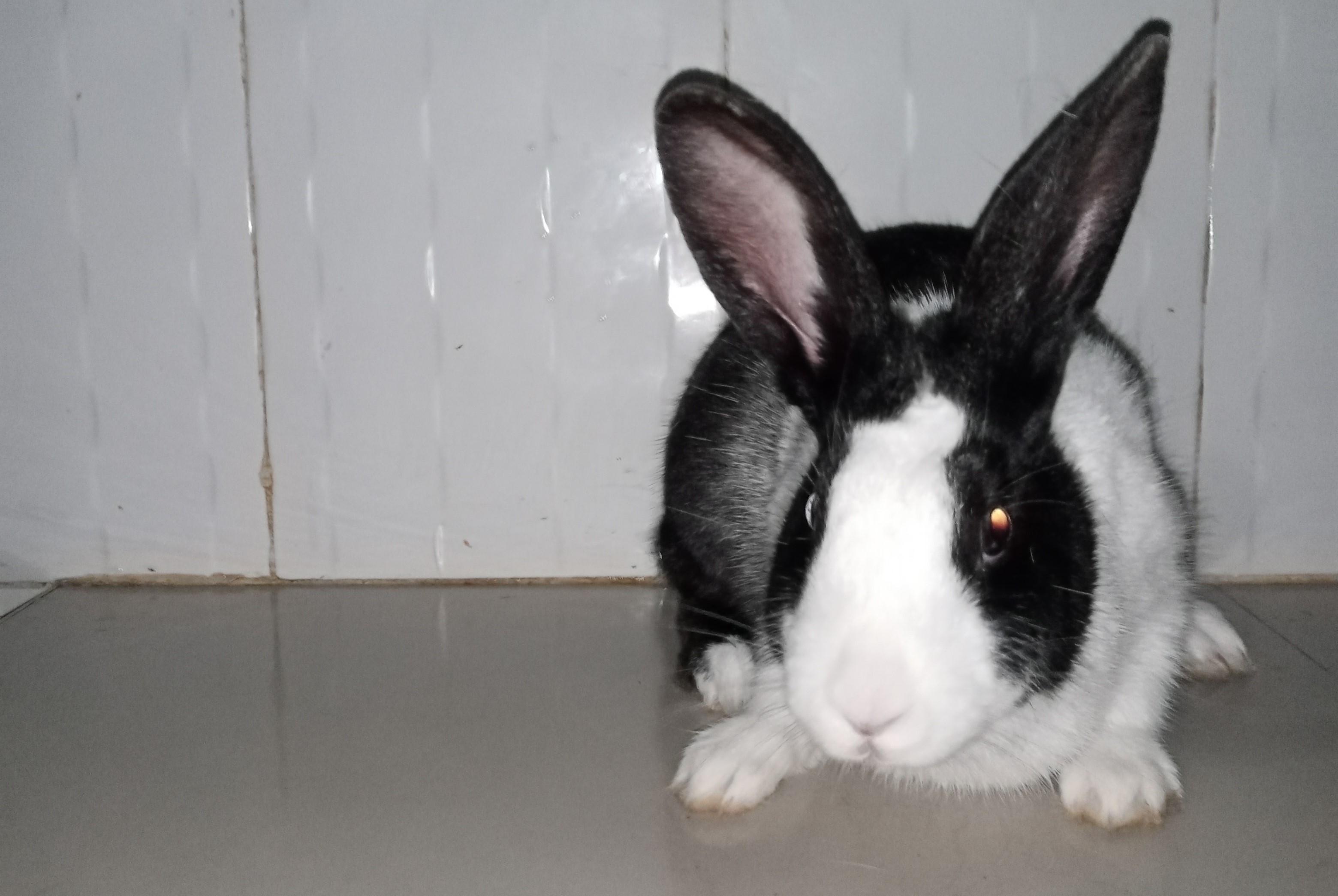 Rabbit breeding and production @…