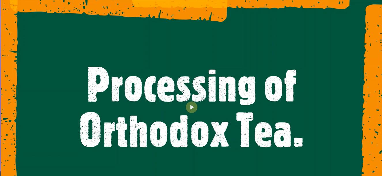 Processing of Orthodox Tea