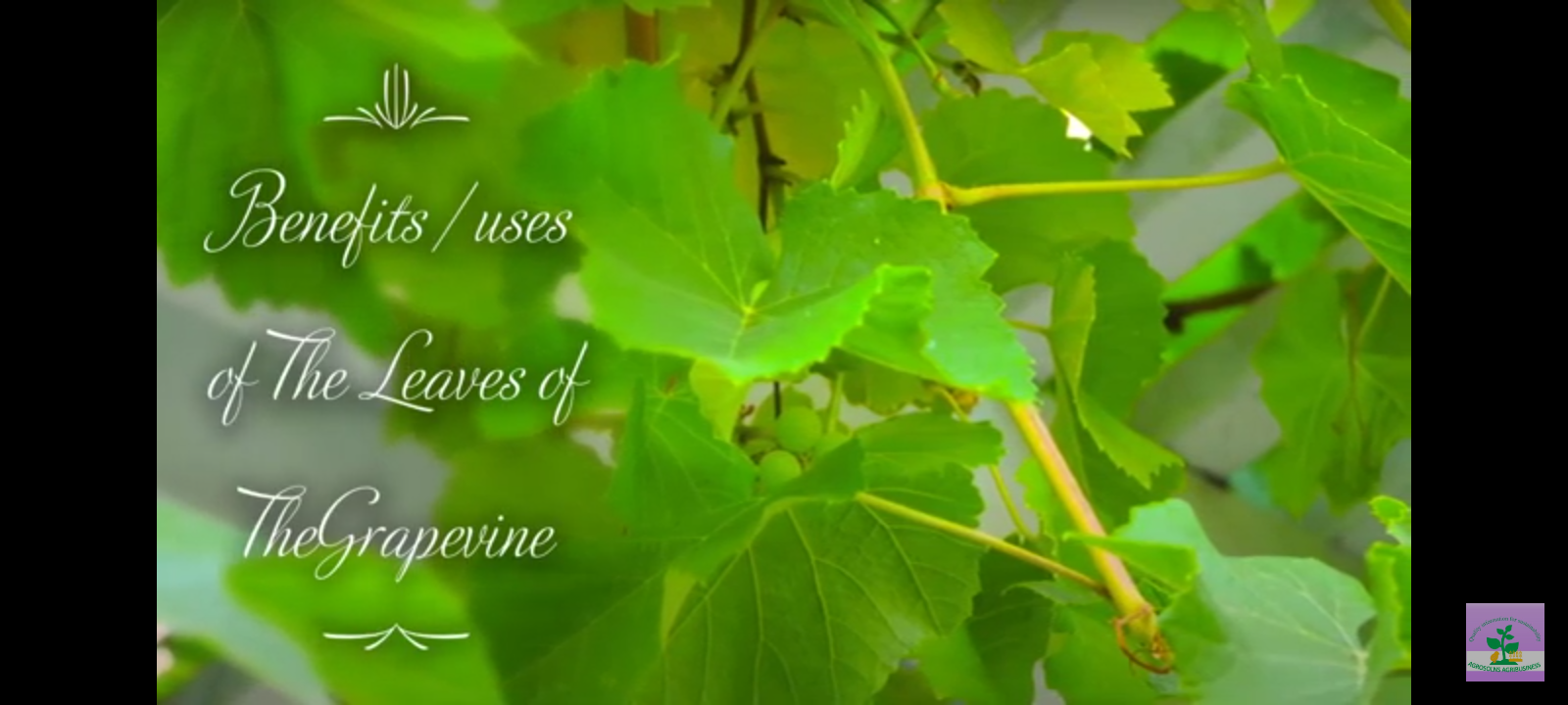 Ten Benefits of the grapevine leaves