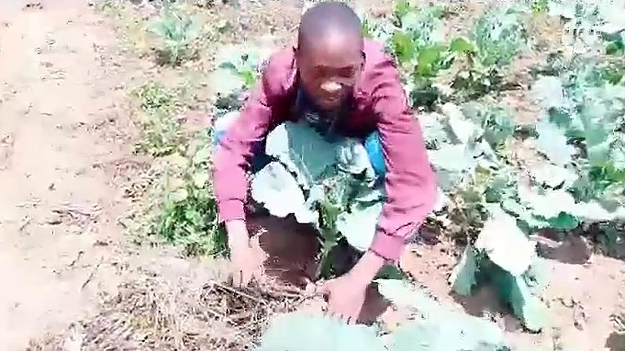 Mulching in vegetables