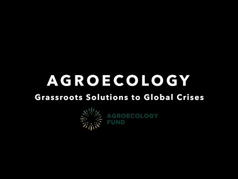Agroecology Grassroots Solutions to Global…