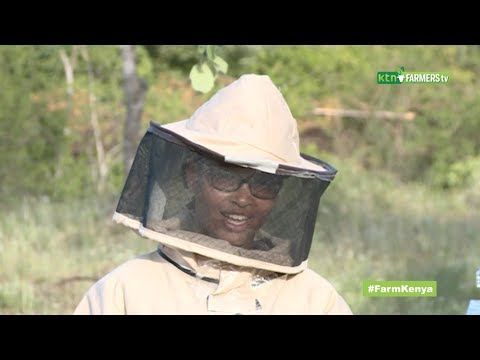 Beekeeping for beginners from…