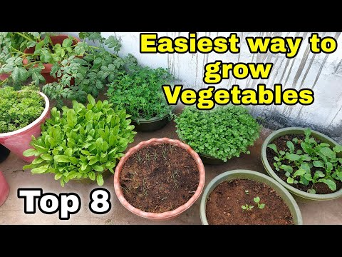 Easiest way to grow Top 8 Vegetables at Home…