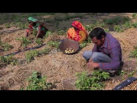 Entrepreneurs for Rural Access -…