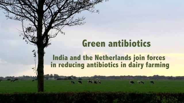 GREEN ANTIBIOTICS - India and…