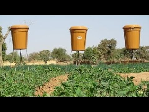 Goutte à goutte pour tomates (…
