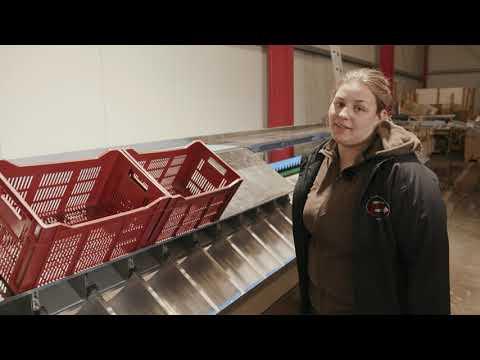 Harvesting Asparagus: Sorting and…