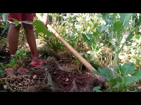 How to do weeding and mulching