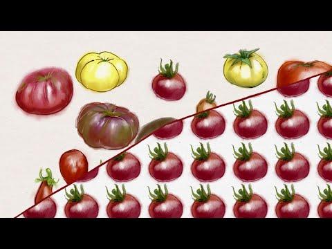 Organic breeding for healthy,…