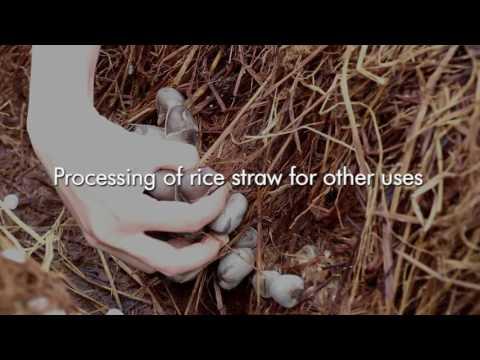 Rice straw management