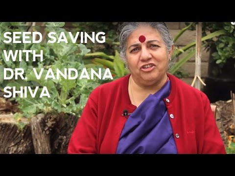 Saving seeds at home with Dr.…