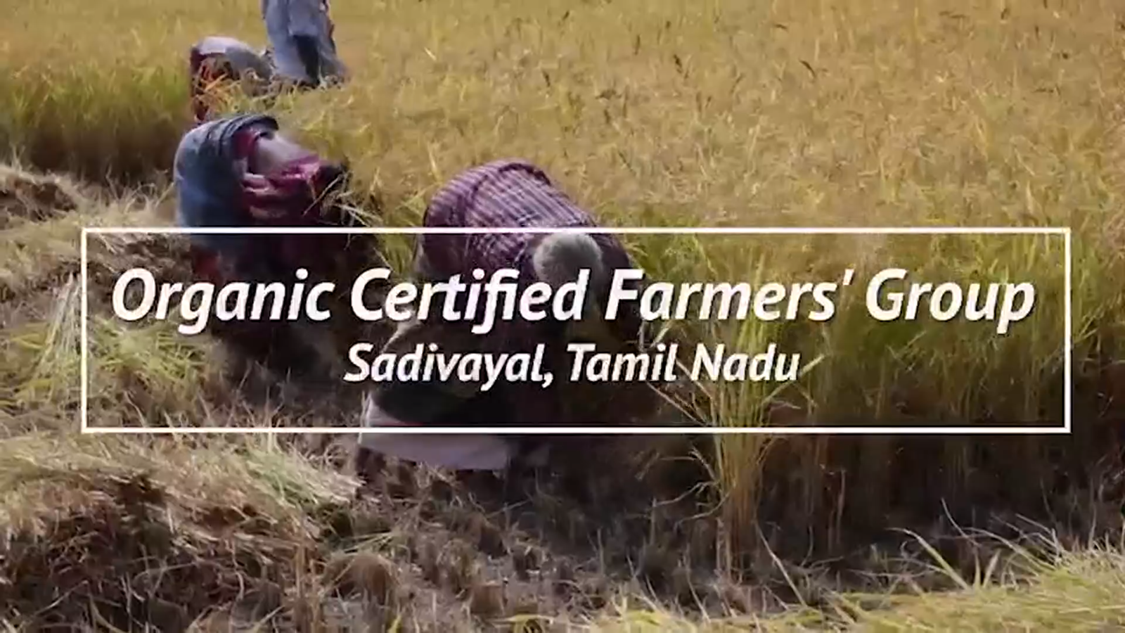 First organic certified Tribal…