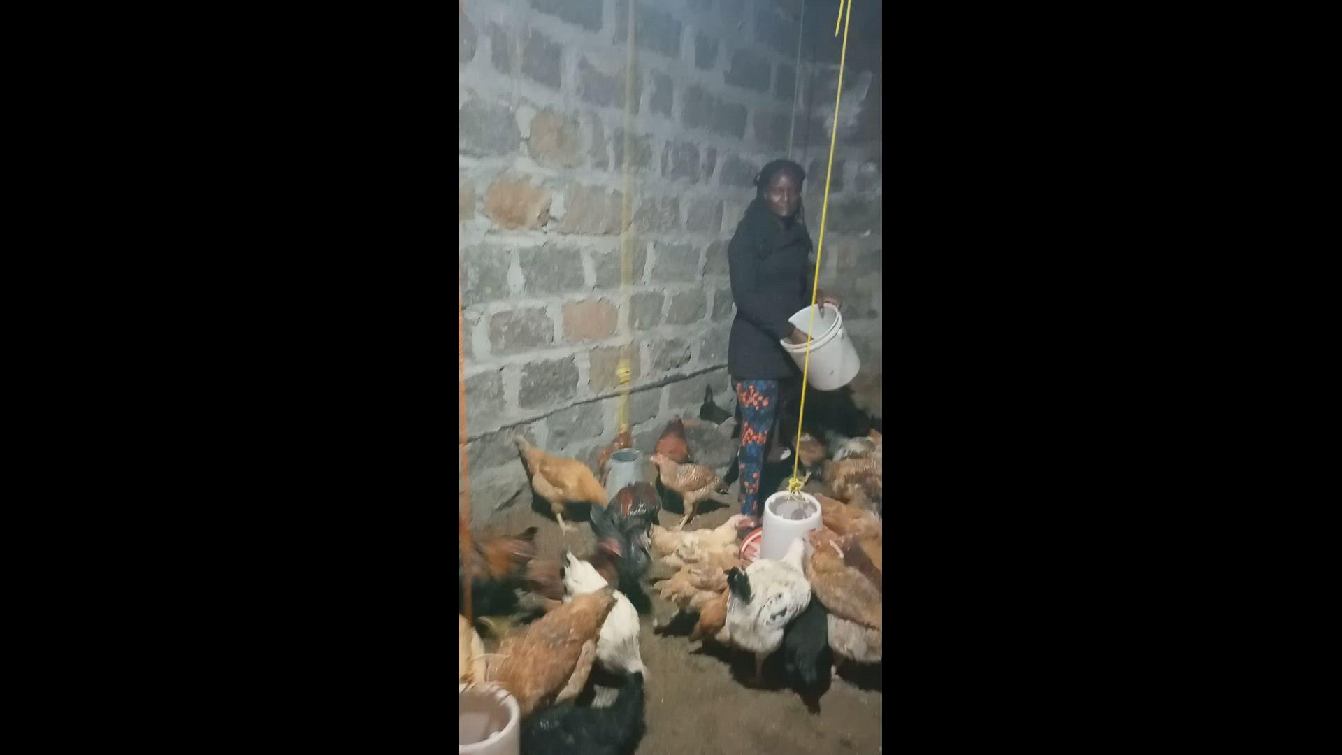 Deep litter system poultry rearing