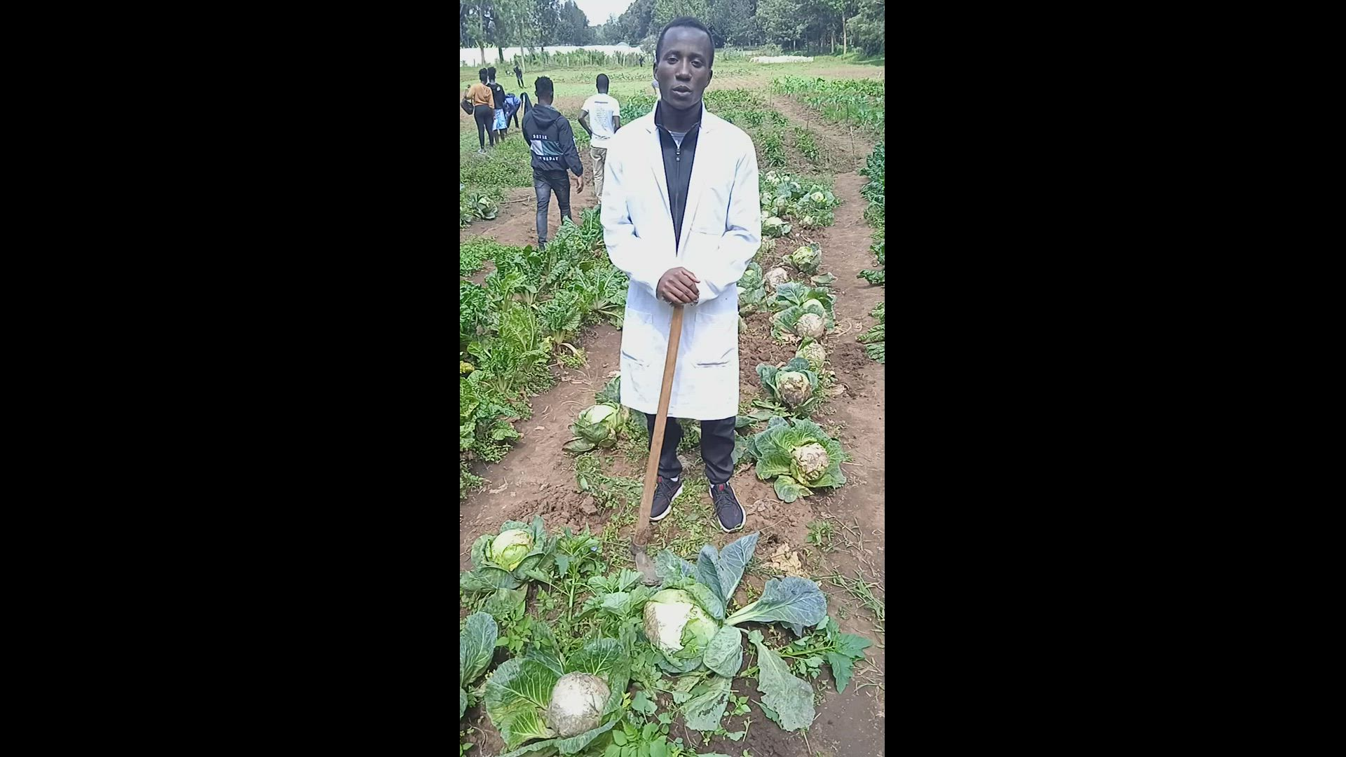 Cabbage disease and pest control