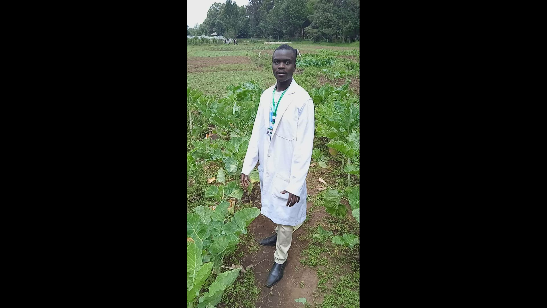 Cabbage pests and diseases