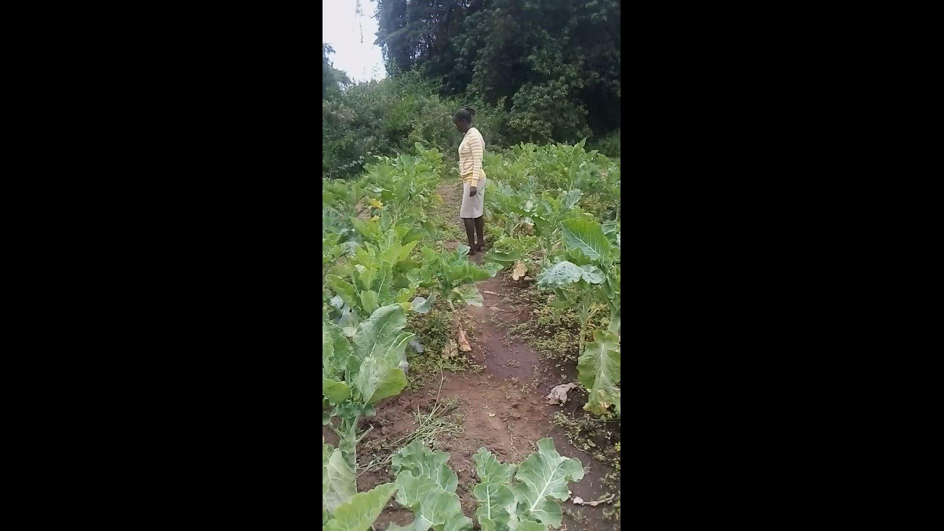 Kale production