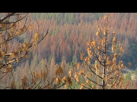 Understanding Forest Ecology: Fire, Wate…